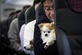 Emotional support animal real Therapy Time Magazine Delta Is Cracking Down On Emotion Support Animals Time