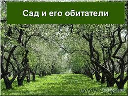Презентация на тему Сад и его обитатели Что такое сад Сад  1 Сад и его обитатели