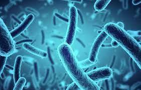 Para qué sirven los probióticos? - Phyto Actif