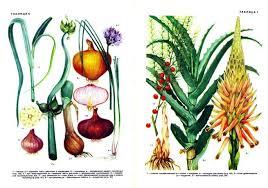 Фото Культурные Растения Все культурные растения которыми сегодня питается человечество произошли от диких видов растений которые древний человек использовал в пищу