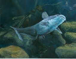 flathead catfish wallpaper. Modren Catfish Flathead Catfish Wallpaper Artwork Related Keywords Suggestions  Long 2181x1685 Inside Wallpaper I