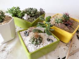 Small Picture The Cactus Garden Design Geometric Geometric Cactus Gardens
