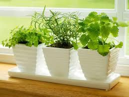 Indoor Kitchen Herb Garden Kit Indoor Kitchen Herb Garden Kit Metatromnet