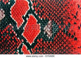 red snake skin wallpaper. Simple Red Snake Skin Wallpaper Background Stock Photo With Red U