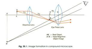 Types Of Microscopes Chart Top 8 Types Of Microscopy With Diagram