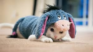 cute kittens in costumes. Contemporary Kittens 50 Best Cats Dressed Up Ideas  Kittens In Costumes For Cute In Costumes R