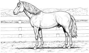 Printable Coloring Pages horse coloring pages to print for free : Good Realistic Animal Coloring Pages 86 For Free Colouring Pages ...