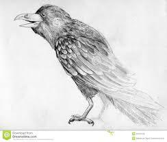 эскиз ворона иллюстрация штока иллюстрации насчитывающей нога