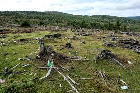 Imagini din satelit: ce suprafaţă împădurită a pierdut România şi judeţele unde s-a tăiat cel mai mult