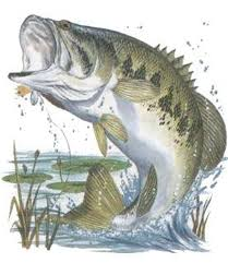largemouth bass jumping. Fine Largemouth Bass Fish Jumping  Bassjumping Fishing Tips Boats Fly  And Largemouth Pinterest