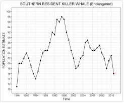 Facing The Possibility Of Extinction For The Killer Whales