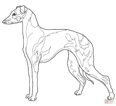 Small Picture Italian Greyhound coloring page Free Printable Coloring Pages