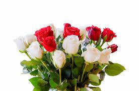Kuvahaun tulos haulle ilmaise ruusujen kuvat