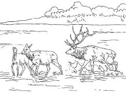 Small Picture Winter Elk Coloring Pages Winter Elk Coloring Pages Color Nimbus