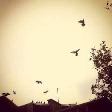 Onun kalbini kırmak bir güvercinin yuvasını yıkmak kadar günahtı benim  için.