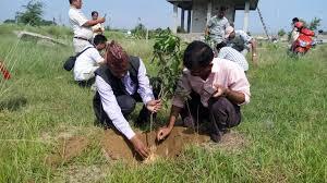 Image result for बृक्षारोपण गर्ने घोषणा