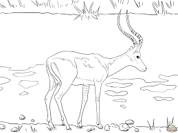 Small Picture Realistic Impala coloring page Free Printable Coloring Pages