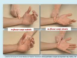 Manuelni misicni test rucnog zgloba (art. radiocarpalis) Wrist