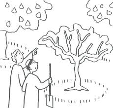 Mustard Seed Parable Colouring Page Mustard Seed Coloring Page