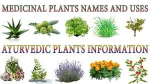 Medicinal Plants And Their Uses 20 Ayurvedic Plants Names Medicinal Herbs You Can Grow