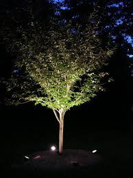 landscape lighting trees. Tree Uplighting Ideas Landscape LightingOutdoor Lighting Trees