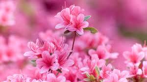 10 pięknych roślin doniczkowych kwitnących zimą - Allegro.pl