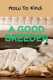 To How Breeders Good Labrador Spot pwrxwa