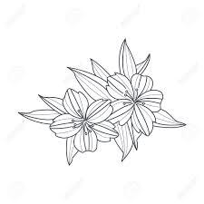 予約手描きベクトル シンプルなスタイルのイラストを着色するための野生の花白黒図面