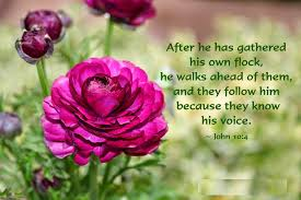 Beautiful Pictures Of Flowers With Quotes Best Of Flowers Quotes Life Many Flowers