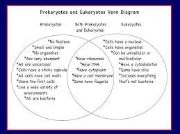 Compare Prokaryotic And Eukaryotic Cells Venn Diagram Unicellular And Multicellular Venn Diagramvenn Diagram