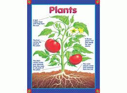 Plants Learning Chart