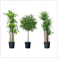 small plants for office. Popular Fresh Desk Plants Good For Office Netztor Hhr Best Small