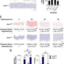 Abnormal Breathing Patterns Inspiration Av48 Mice Show Abnormal Breathing Patterns A Example Of