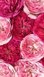 Floral Wallpapers For Your Phone — The ...