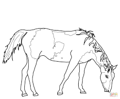 Small Picture American Paint Horse coloring page Free Printable Coloring Pages