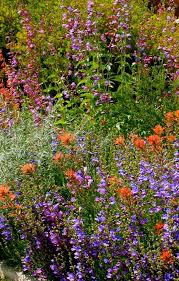 california native plants for the garden. You Can Create A Native Garden Anywhere. - Grid24_12 California Plants For The