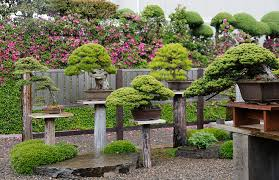 bonsai gardens. Last Week We Visited Several Of The Bonsai Gardens In Omiya Village. Our First Stop Was Garden Masahiko Kimura.