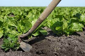 control weeds without chemicals