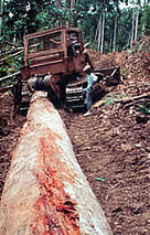 Logging The Forests Of New Guinea Wwf