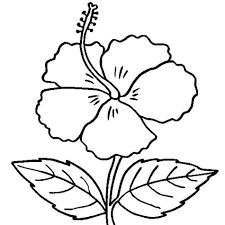 Small Picture Hibiscus Flower Coloring Pages Coloring Pages