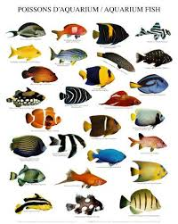Clown Fish Identification Chart Freshwater Aquarium Fish Chart Saltwater Aquarium Fish