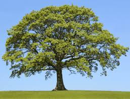 Image result for trees online