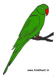 toefl essay prompts ankur patel resume famous essays on art flight orange bellied parrot budgies also known as american parakeets are one of the best talking