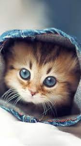 Cute Kitten Wallpapers (54+ best Cute ...