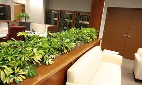 office indoor plants. get indoor plants on rent for better ambience inside the office t