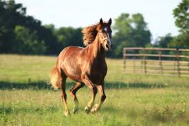horses galloping in a field. Plain Galloping Horse Pasture Field Ranch Gallop Galloping Throughout Horses Galloping In A Field O