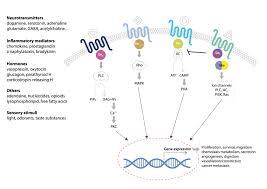 Gpcr Signaling Gpcr Research