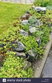 rock garden with succulent plants