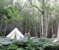 camping in the woods. Wonderful The Real Camping In The Woods Inside In The O