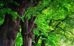 Tree Background Wallpaper #6986339